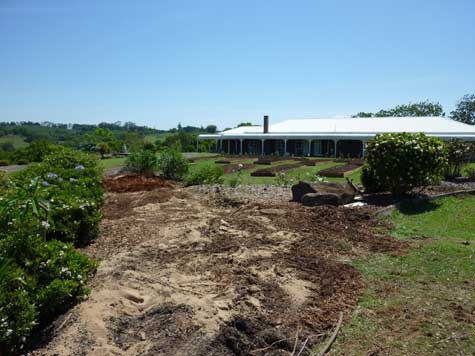 Ornamental_shrubs_removed_to_be_replaced_by_food_forest.jpg
